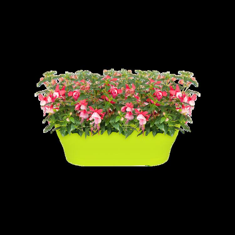 lime green . elho corsica wall basket 25cm planter