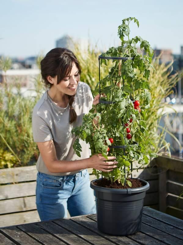 green basics tomato pot